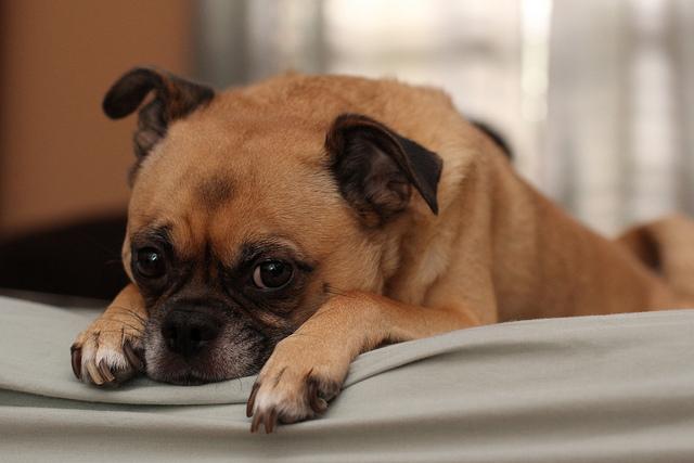 Sad Doggie by Amber West