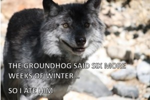 Wolf Ate Groundhog with Words