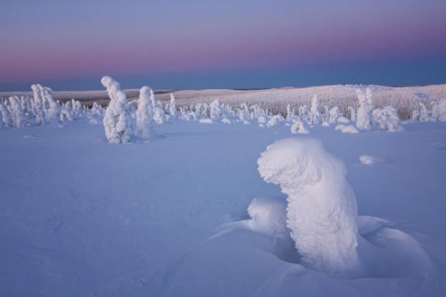 Finnish Forest Niccolo Bonfadini